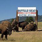 Buffalo What??? by Cheri Bouvier-Johnson