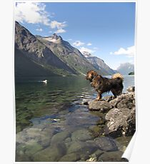 my dogs at the fjord (marsdal) Poster