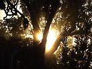 Gums & Sunbeams by debsphotos