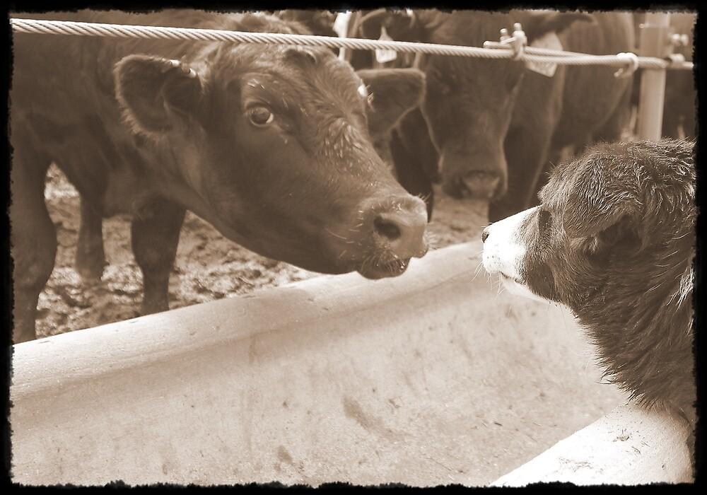 Sam vs Cow by Jessie Miller/Lehto