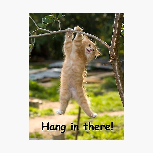 Hang in There Cat Poster  Photographic Print