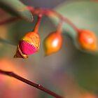 Eukalyptusknospen und Fortschritt von Joy Watson