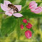 Honey bee on apple blossom by George92