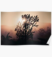 Joshua Trees bei Sonnenaufgang Poster