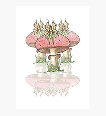 Dainty Fairies Sat on Toadstools Photographic Print
