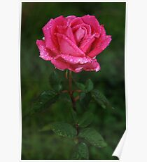 Jewelled Rose Poster