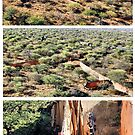 A COLLAGE ON AERIAL CAPTURES ... How wild- animals gets re-located by Magriet Meintjes