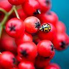 Berry Bug by Nicole Pearce