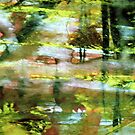 reflections in a pond #6 by banrai