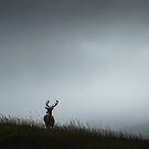 Scottish Deer by Patrice Mestari