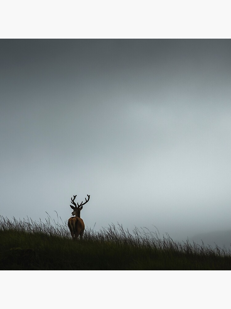«Scottish Deer» par patricemestari