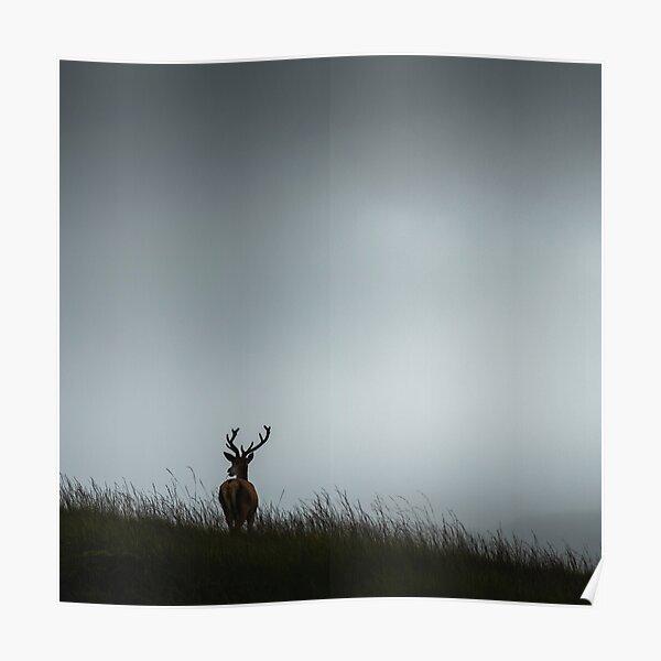 Scottish Deer Poster