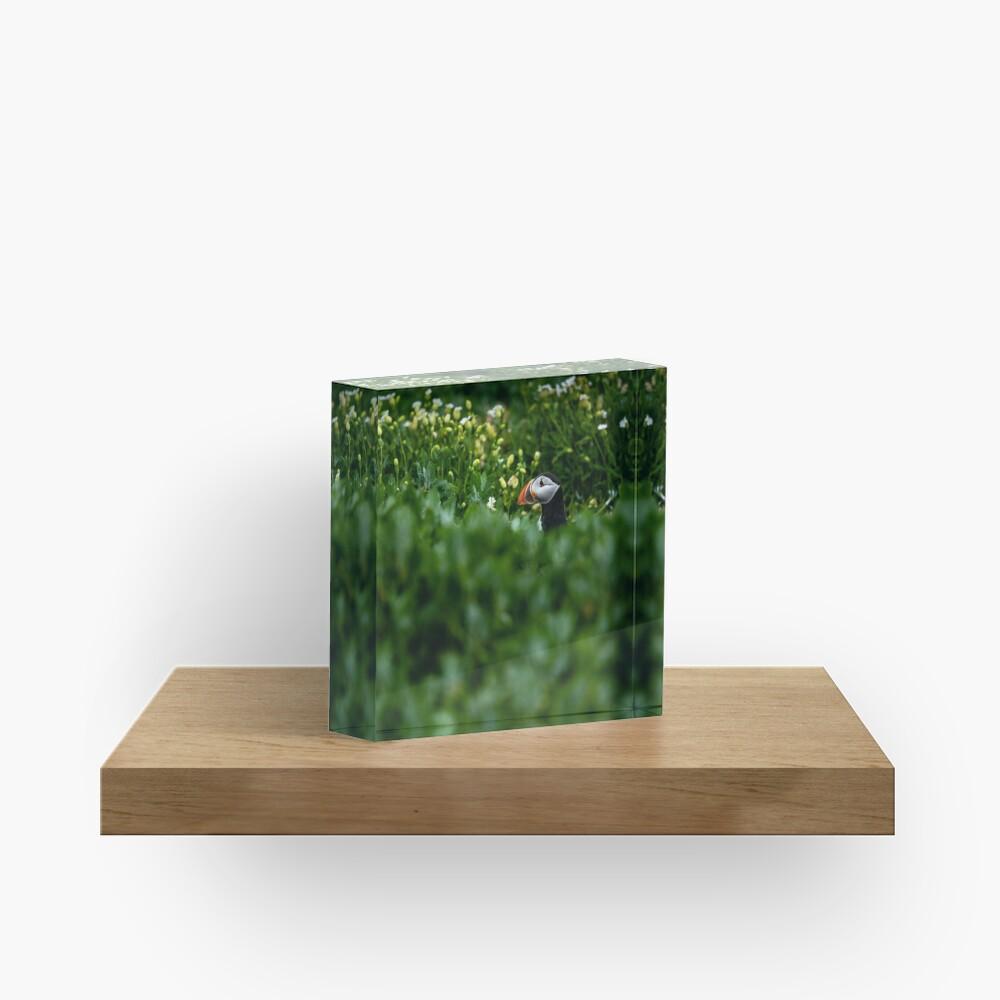 Bloc acrylique «Macareux Moine»