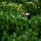 Puffin Monk by Patrice Mestari