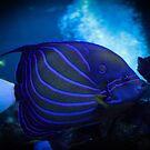 «azul bajo el agua» de Perggals© - Stacey Turner