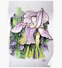 Iris Watercolor Poster