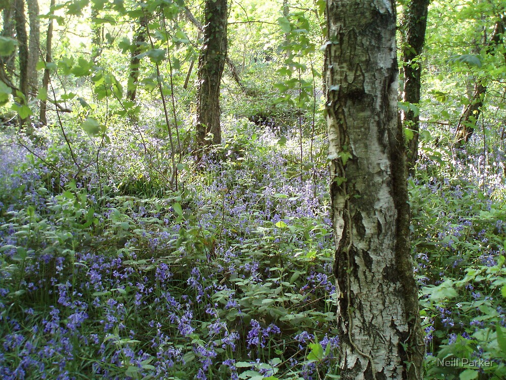 Tyle-Y-Coch Bluebells. by Neill Parker