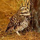 Burrowing Owl by Larry Trupp