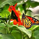 A Royal visit from the Monarch by Larry Trupp