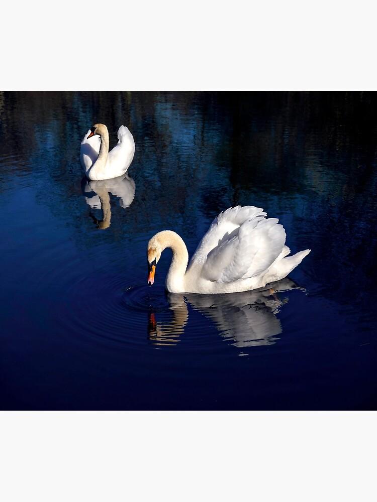 Swan Lake by ScenicViewPics