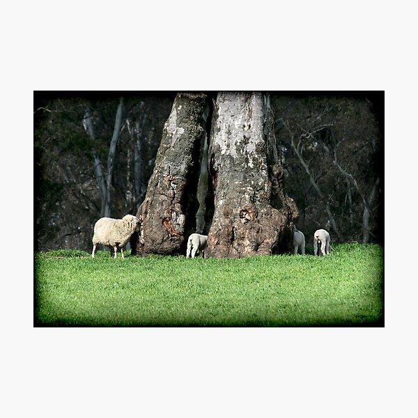 ~ The Family Tree ~ Photographic Print