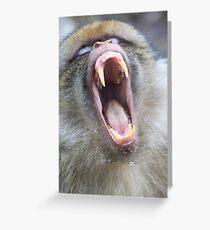 Barbary Macaque (Macaca sylvanus)  Greeting Card