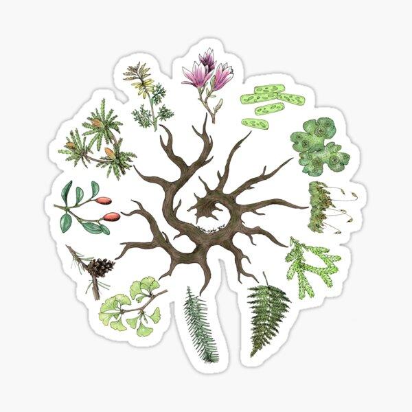Plant Evolutionary Tree (Plain Background) Sticker