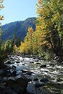 Cascade Creek by Sun Dog Montana