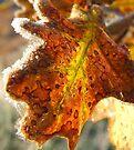 Leaf-light by Penny Kittel