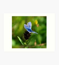 A Silver Studded Blue Art Print