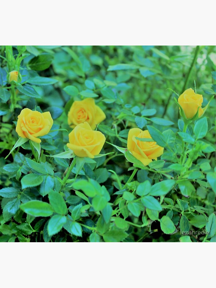 Yellow Rose Dance Greeting Card By Lezahredle Redbubble