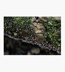Speckled White Photographic Print