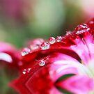 The Fairy's Umbrella! by Stephanie Hillson