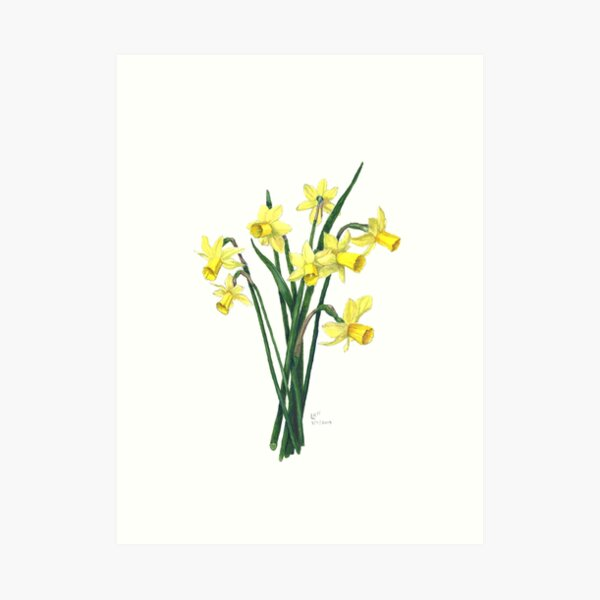 Little Daffodils Botanical Illustration Art Print