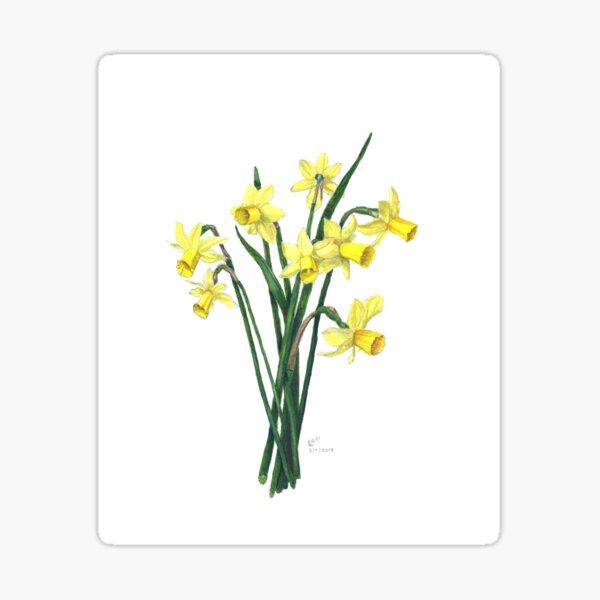Little Daffodils Botanical Illustration Sticker