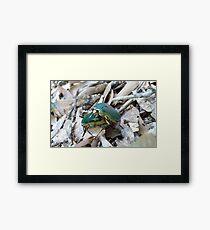GREEN JUNE BEETLES MATING Framed Print
