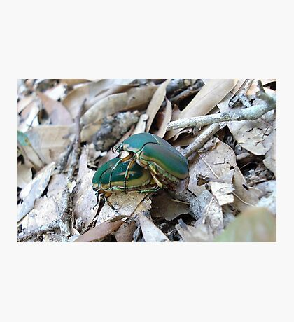 GREEN JUNE BEETLES MATING Photographic Print