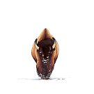 Winter Bison by Sun Dog Montana