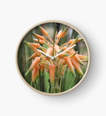 Aloe cooperi - flower Clock