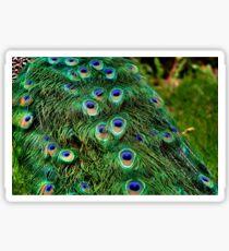 Peacock Plumage Sticker