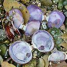 Sea Shells by AnnDixon