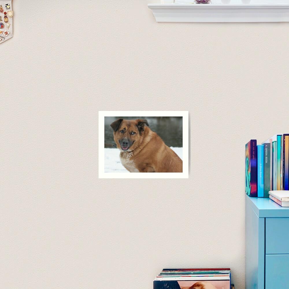 My dog Charlie 1 Art Print
