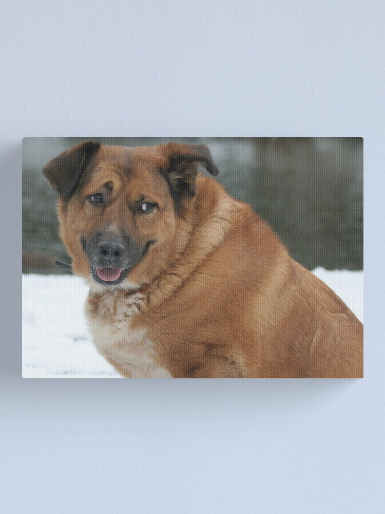 Alternate view of My dog Charlie 1 Canvas Print