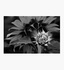 Silver Touch Photographic Print