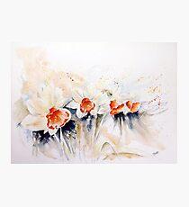 Dancing Daffodils Photographic Print