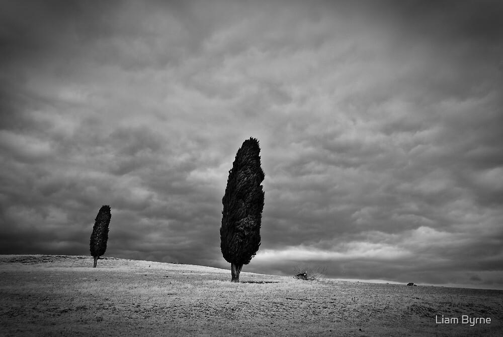 Outcasts - Midlands Highway, Tasmania by Liam Byrne