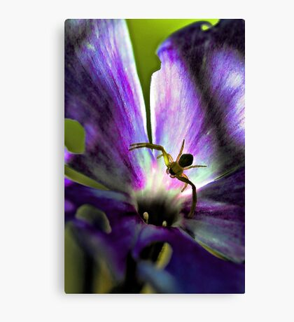 Lavender Fall Phlox - Yellow Spider Canvas Print