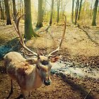 stag by psychoshadow