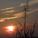 Nature and Sun by AlbertStewart