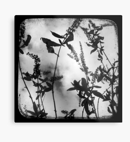 Died Pretty - TTV Metal Print